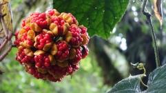 Il parait que 7 petites boules rouges trouvées en une journée, tu es chanceux pour l'année!