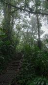 Escalier brume