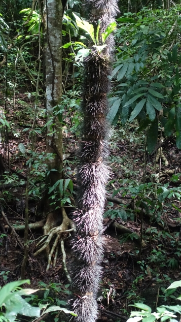 Un tronc poilu